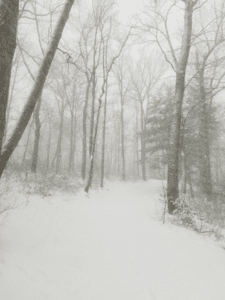A Wooded Area in the Middle of a Flurrry of Snow