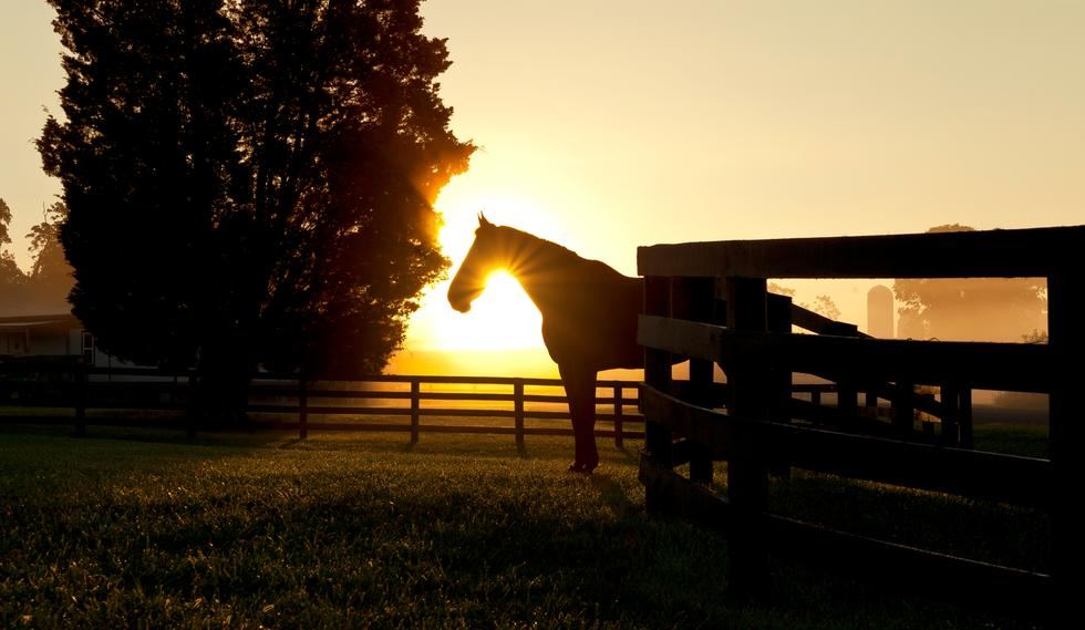 Horse Standing in Front of Sunset
