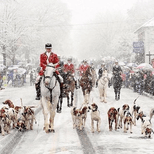 A Parade of Horse and Dogs for the Christmas Parade