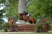 Horse Leaping over an Obstacle at the Upperville Horse Show